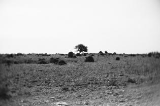 roadtrip_herbst-36